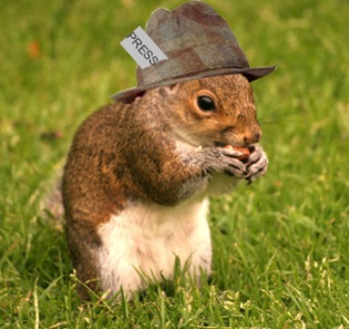 The tabloid squirrel