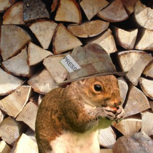 Tabloid squirrel himself