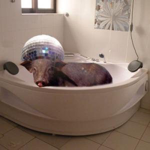 pig in a bath